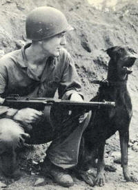Doberman_Pinscher_Andy_at_Bougainville_WWII_Photo_small